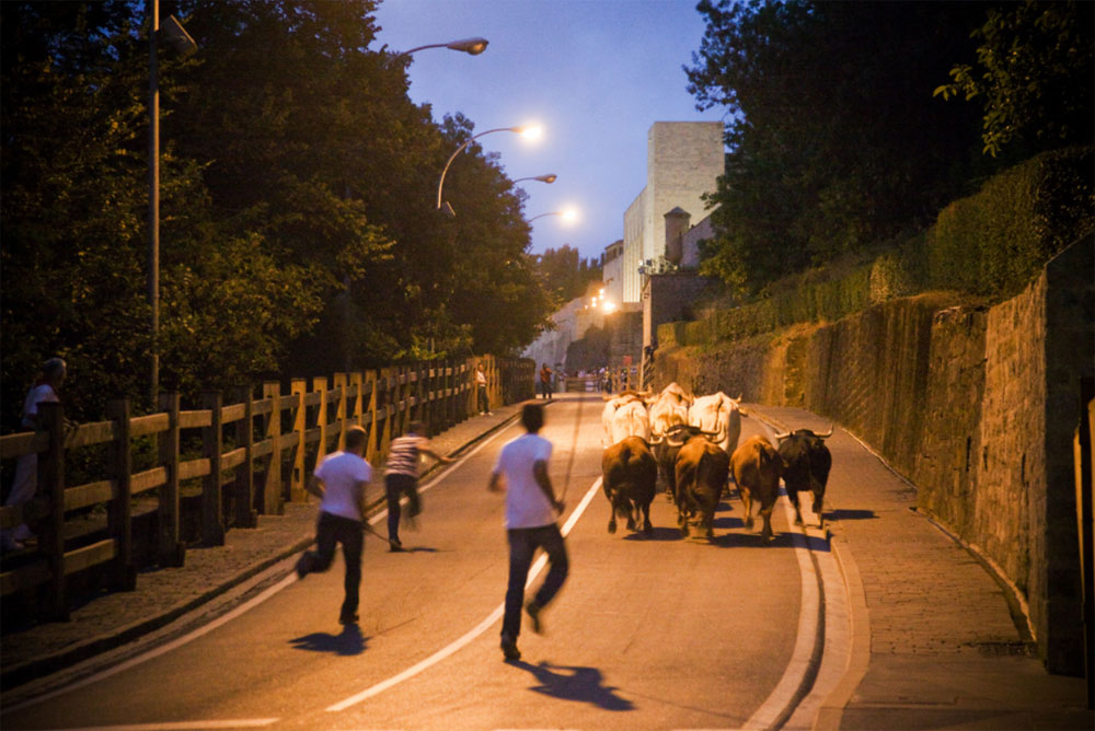 A band of bovine brothers on their last night together. Victoriano Izquierdo