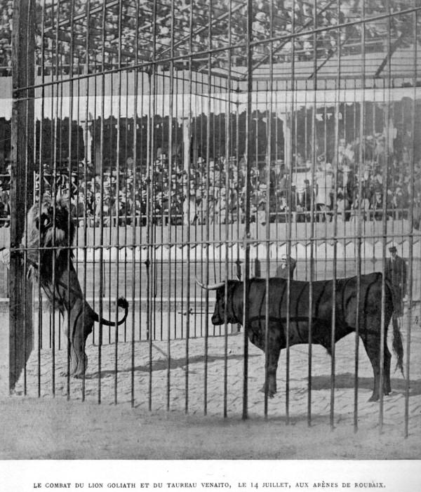 El Toro Es Uno De Los Animales Más Mortíferos Del Mundo Y Podría Sin