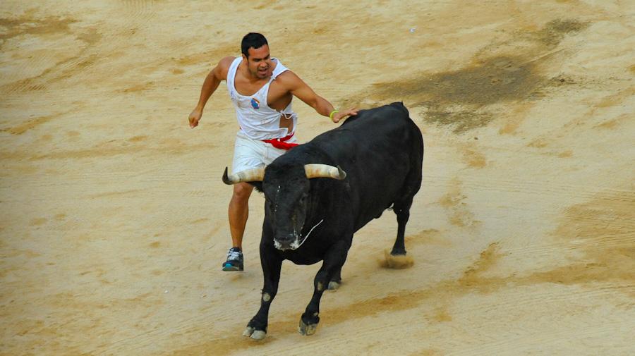 Citar a los toros en la plaza está terminamente prohibido en el encierro.