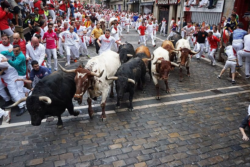 Fotos de la manada de toros y cabestros girando hacia la calle estafeta en el encierro de Sanfermin en Pamplona